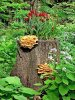 Make A Tree Stump Planter _12